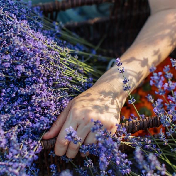 Sust_webb_arm_lavender_1080x1350.jpg